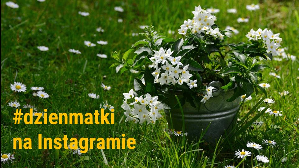 analiza-hashtaga-dzien-matki-na-Instagramie_analityka-Instagrama-w-NapoleonCat