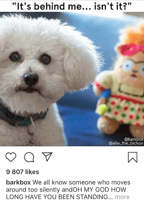 memy na Instagramie